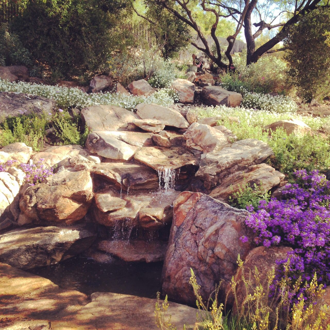 Landscape design installation phoenix az full version for Landscape design phoenix
